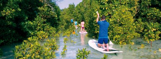 The Surfzanzibar Mangroves Sup Tour